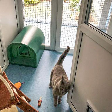 Top Cat Cattery Bath